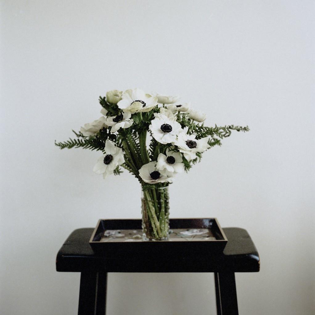 anemone-fuji-superiahasselblad-500c.jpg