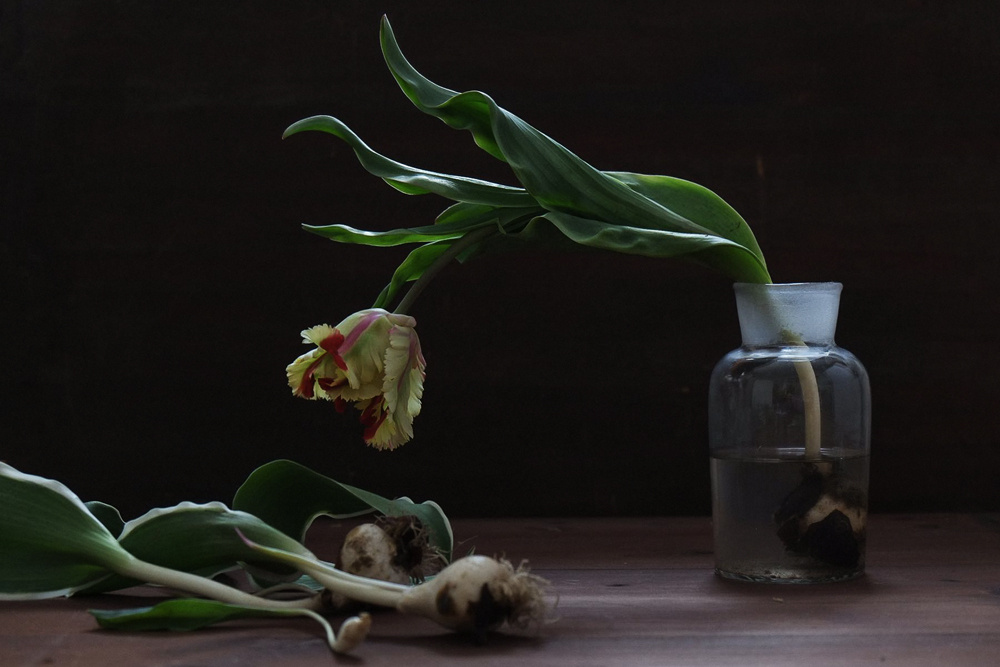 decomposed-spring-004.jpg