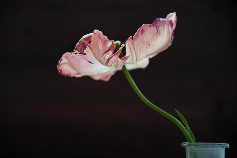 decomposed-spring-005.jpg