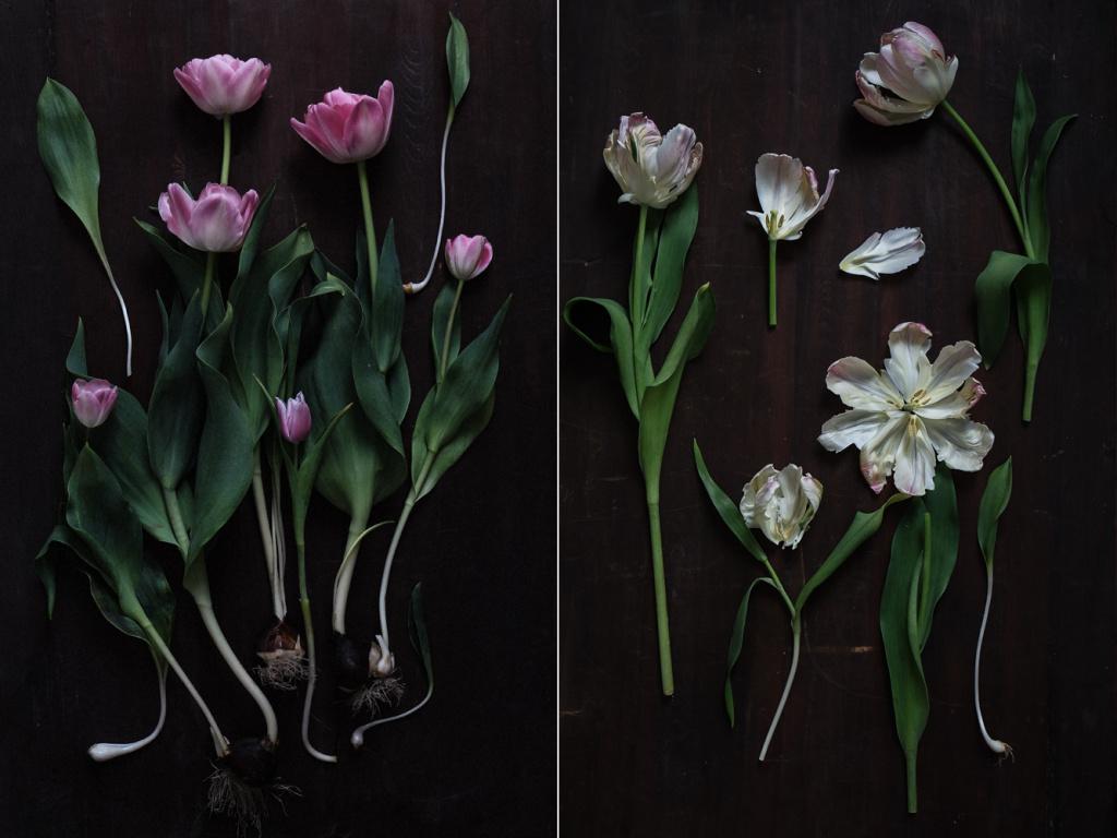 decomposed-spring-007.jpg