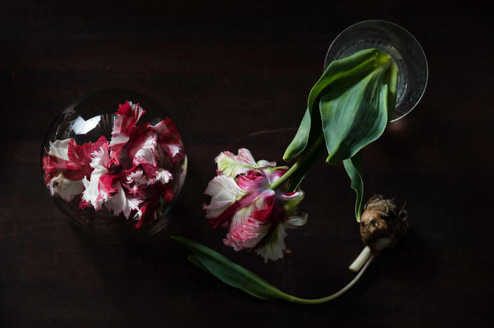 decomposed-spring-008.jpg