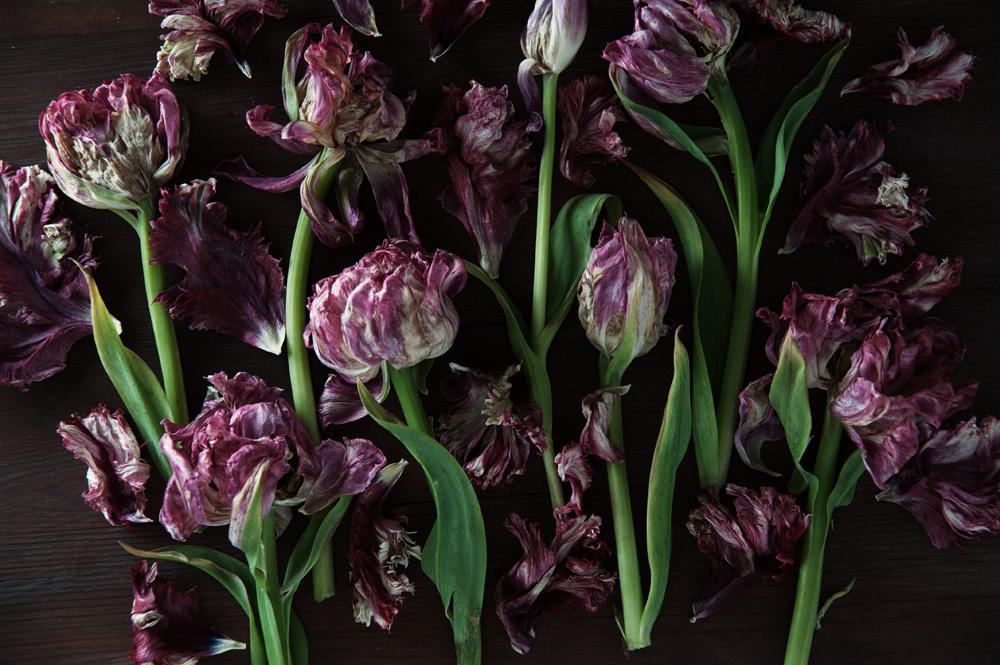 decomposed-spring-009.jpg