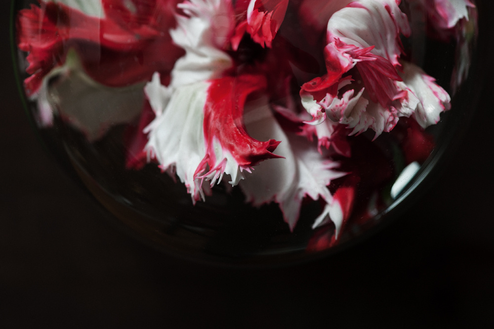 decomposed-spring-012.jpg