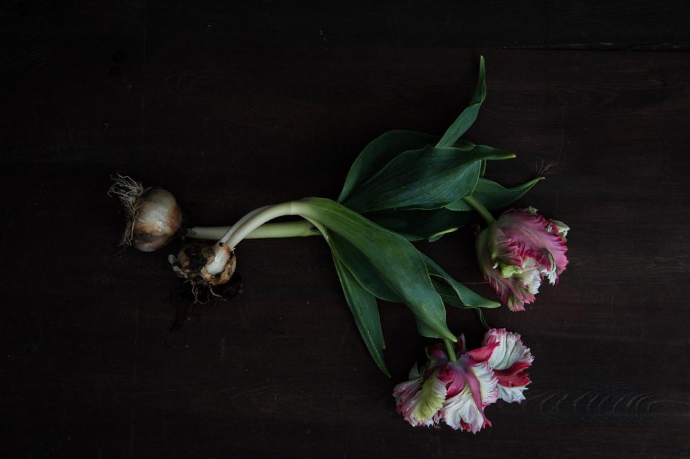 decomposed-spring-018.jpg