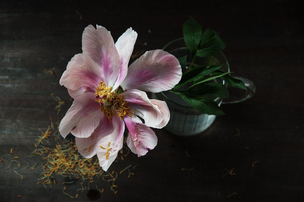 decomposed-spring-019.jpg