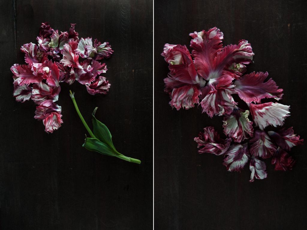 decomposed-spring-020.jpg