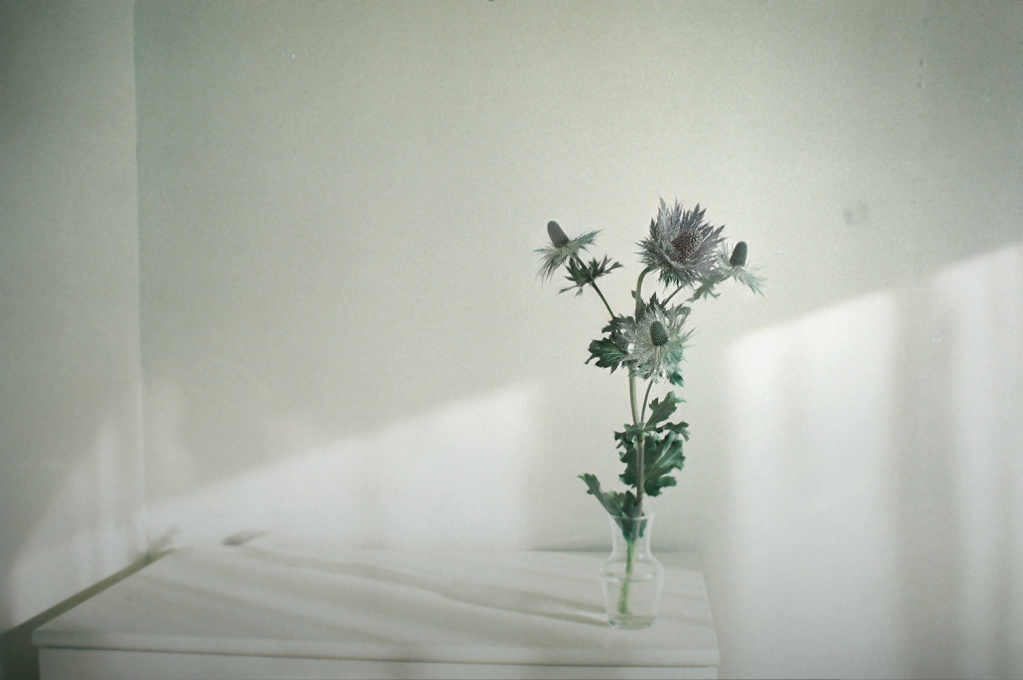 shades-of-white-003.jpg