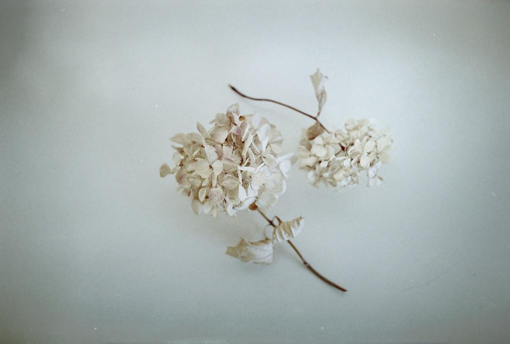 shades-of-white-005.jpg