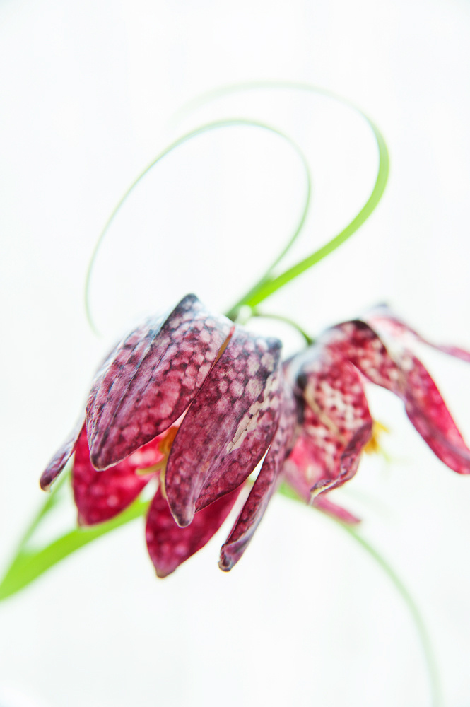 flora-misc-037.jpg